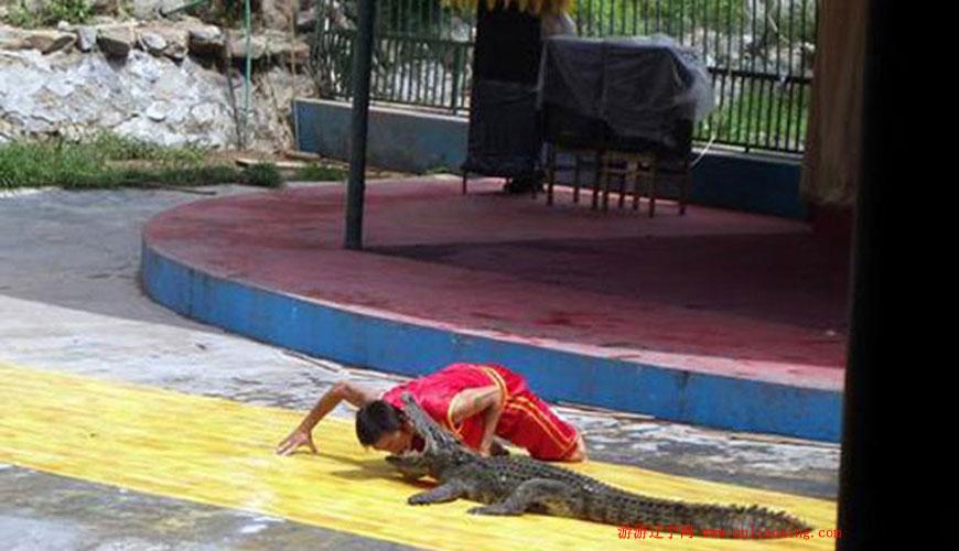 旅顺鳄鱼园