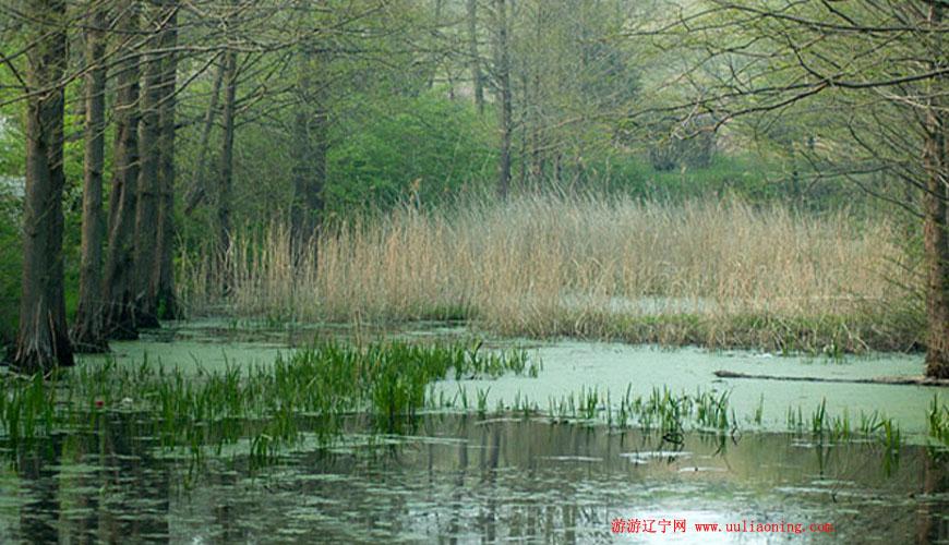 龙湖湿地公园