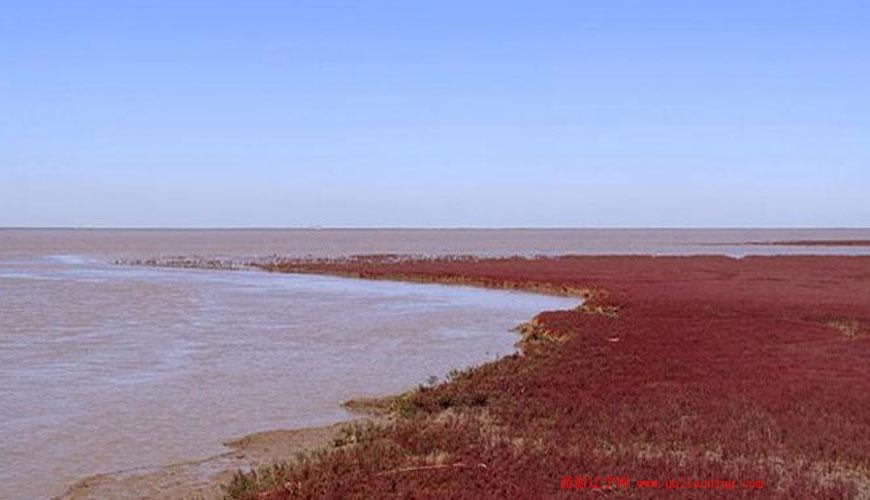 红海滩风景区