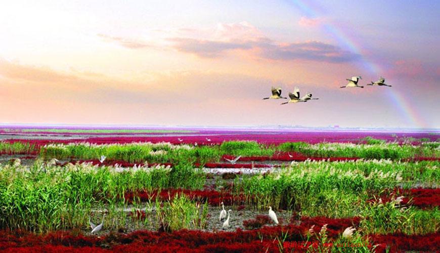 看盘锦红海滩、吃河蟹