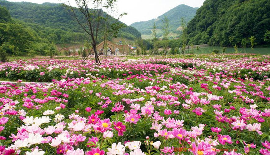 天桥沟国家森林公园