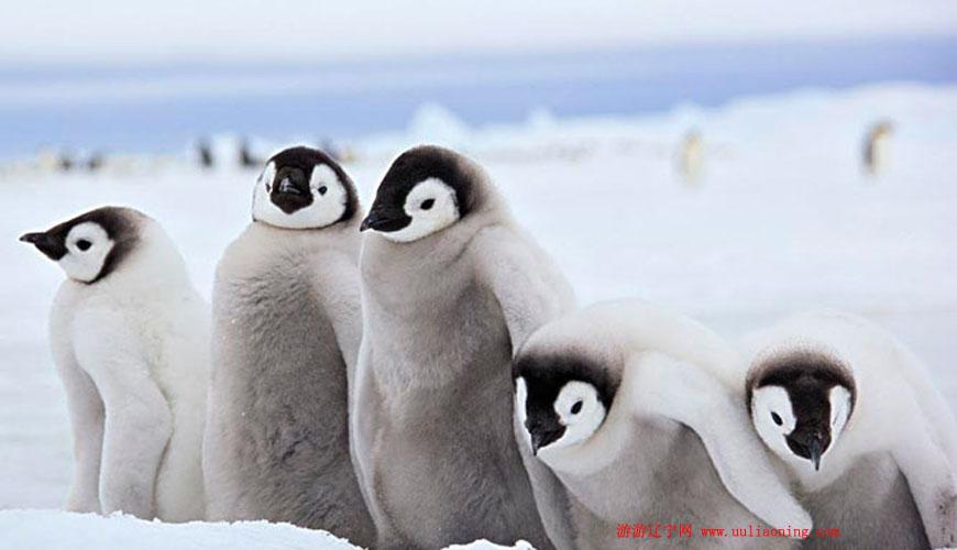 寒假老虎滩极地馆对1.5米以下儿童免费
