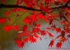 枫叶之都-本溪