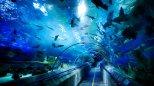 圣亚海洋世界图集
