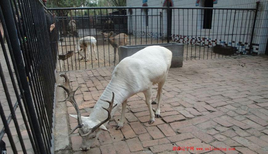 海城西柳老栓动物园